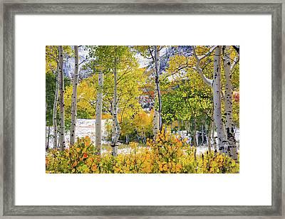 Brilliant Autumn Framed Print by Leland D Howard