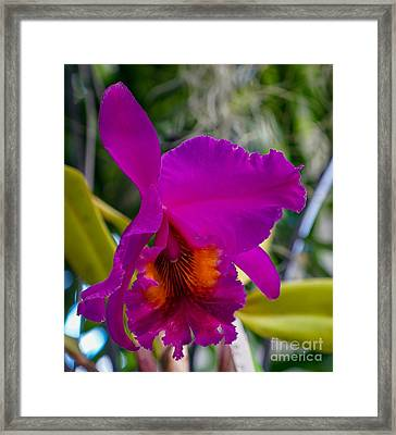 Brilliant Orchid Framed Print