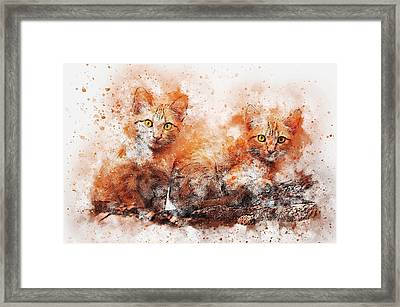 Brothers Cat Framed Print
