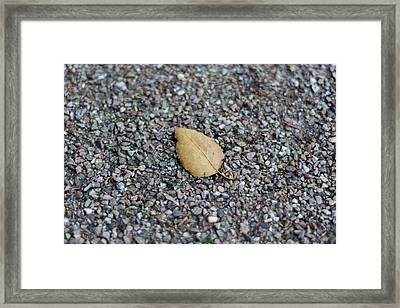 Framed Print featuring the photograph Brown Leaf On Gravel by Scott Lyons