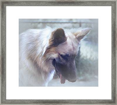 Bruce Looking Down Framed Print