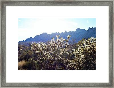 Buckhorn Cholla Framed Print