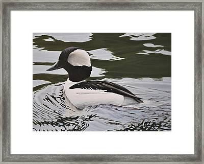 Framed Print featuring the painting Bufflehead by Peter Mathios