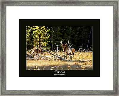 Framed Print featuring the photograph Bull Elk by Pete Federico
