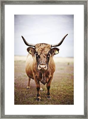 Bull In Field Framed Print by Niels Busch