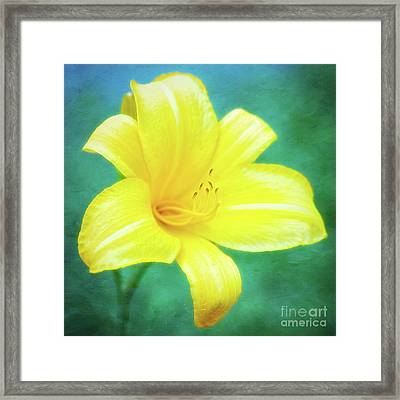 Buttered Popcorn Daylily In Her Glory Framed Print