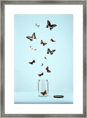 Butterflies Escaping From Jar Framed Print by Martin Poole
