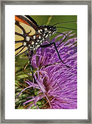Butterfly Closeup Vertical Framed Print