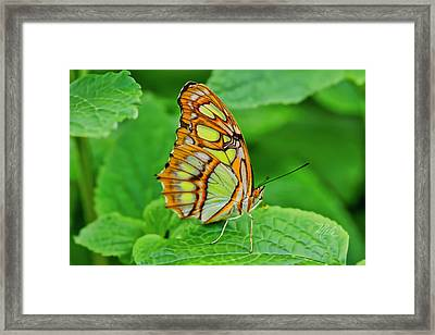 Butterfly Leaf Framed Print