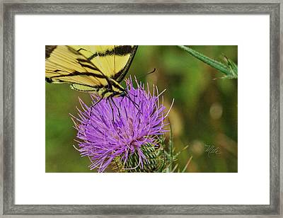 Butterfly On Bull Thistle Framed Print