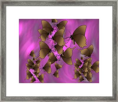 Butterfly Patterns 17 Framed Print