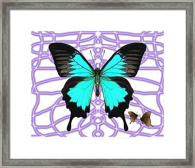 Butterfly Patterns 18 Framed Print
