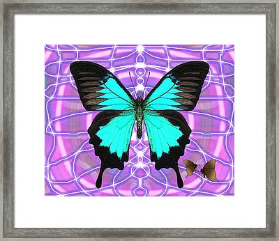 Butterfly Patterns 19 Framed Print