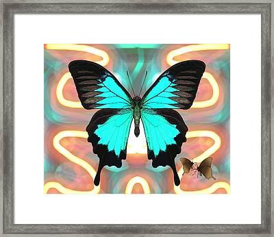 Butterfly Patterns 21 Framed Print