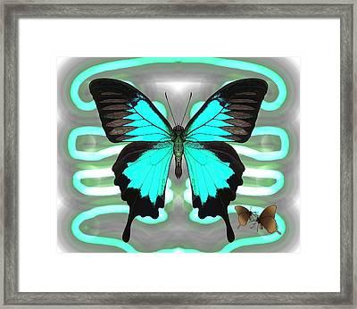 Butterfly Patterns 24 Framed Print