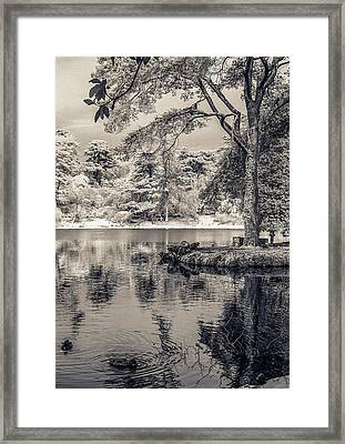 By The Lake Framed Print