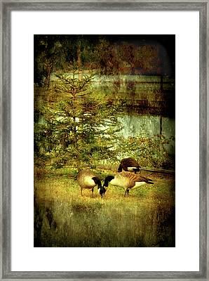 By The Little Tree - Lake Carasaljo Framed Print