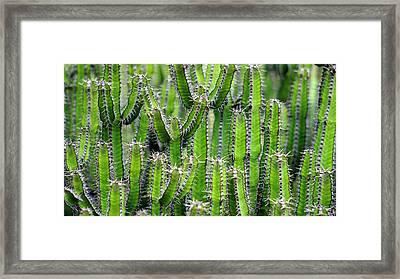 Cacti Wall Framed Print