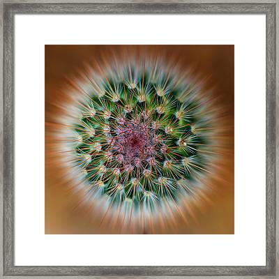 Cactus Cooler Framed Print