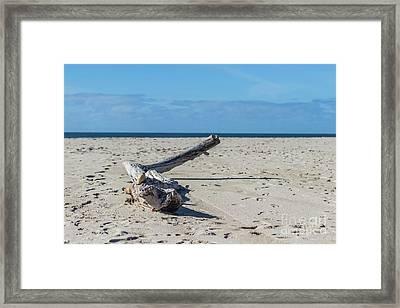 California Driftwood Framed Print