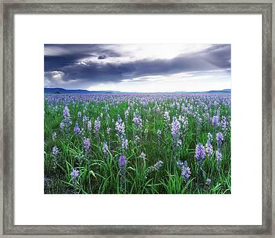 Camas Marsh 2 Framed Print by Leland D Howard