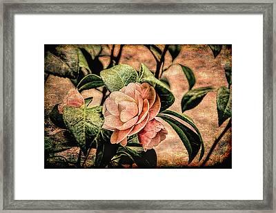 Camellia Grunge Framed Print