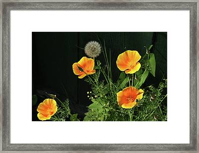 Can I Join Your Party Framed Print