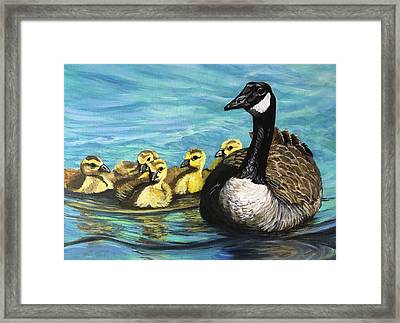 Canadian Goise And Goslings Framed Print