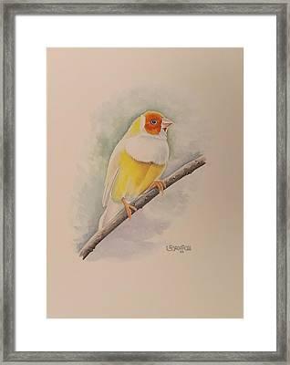 Canary Bird Framed Print