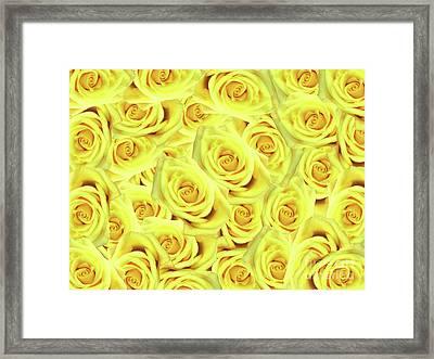 Candlelight Roses Framed Print