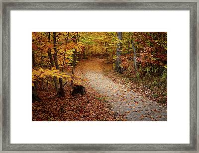 Canopy Of Color Framed Print