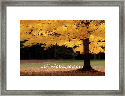 Canopy Of Gold Fall Colors Framed Print