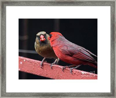 Framed Print featuring the photograph Cardinal Love 1 by Patricia Youngquist
