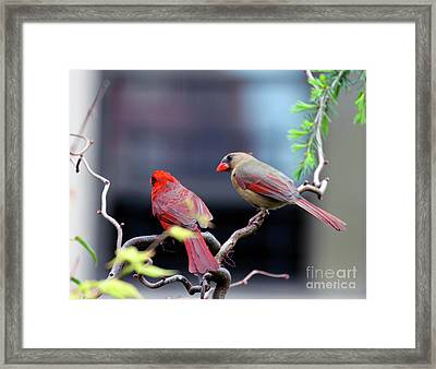 Framed Print featuring the photograph Cardinal Love 3 by Patricia Youngquist