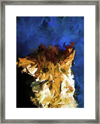 Cat And The Cobalt Blue Wall Framed Print