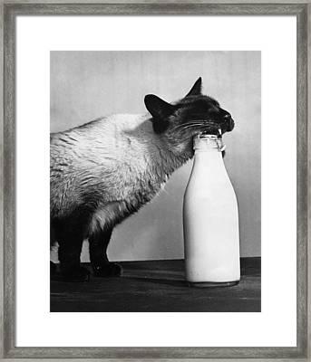 Cat Burglar Framed Print by Fox Photos