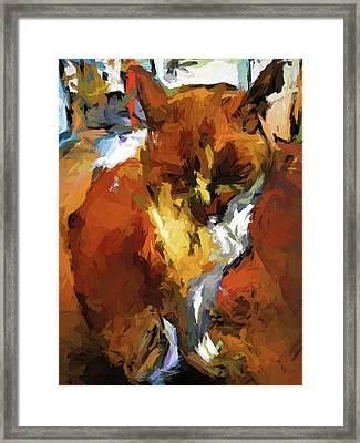 Cat In The Kitchen Framed Print
