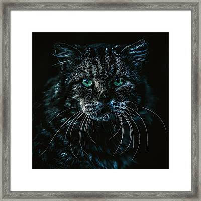 Framed Print featuring the photograph Cat by Rob D