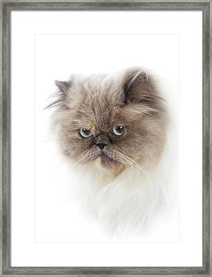 Cat With Long Hair Framed Print by Www.wm Artphoto.se
