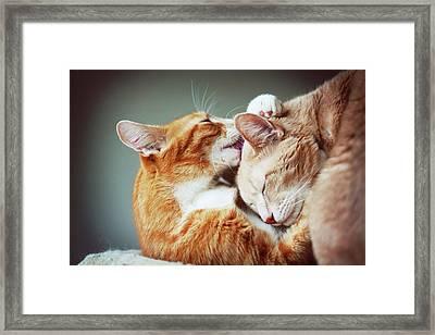 Cats Embrace Framed Print