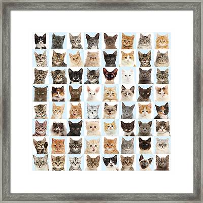 Framed Print featuring the photograph Cats Or Chess by Warren Photographic
