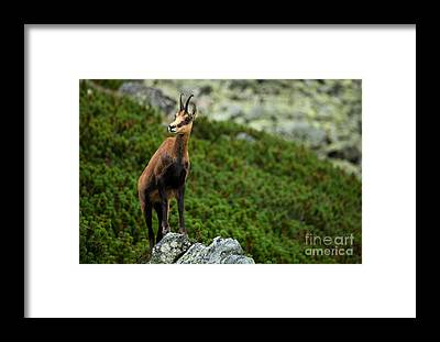 Goat Rocks Wilderness Framed Prints
