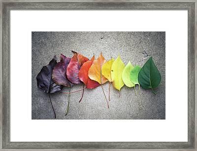 Change Framed Print by Jeff Minarik Photography - Chicago,il
