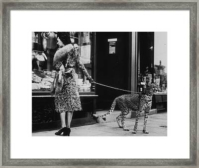 Cheetah Who Shops Framed Print by B. C. Parade