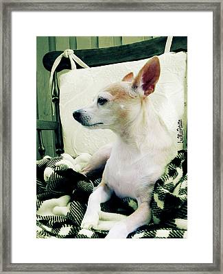 Chihuahua Chiqui Portrait 3 Framed Print