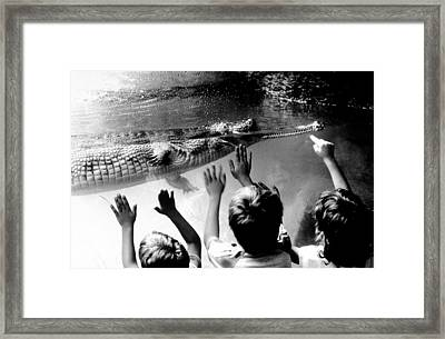 Children Reach Towards The Gharial Framed Print by New York Daily News Archive