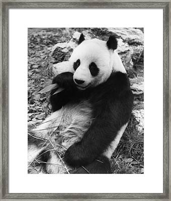 Ching Ching Framed Print by Ian Tyas