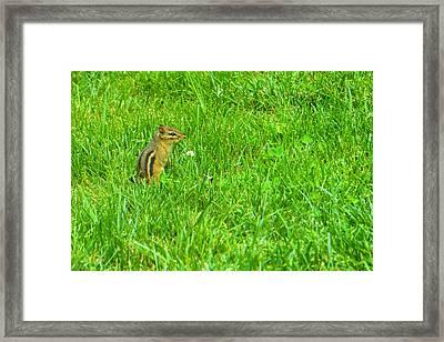 Chipmunk And The Flower Framed Print