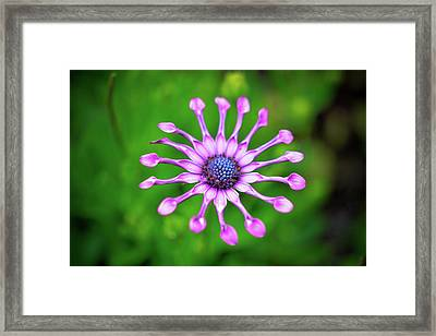 Framed Print featuring the photograph Circular by Michelle Wermuth