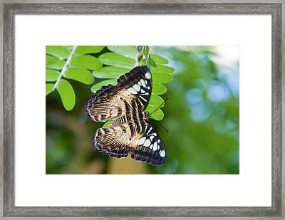 Clipper Framed Print by By Ken Ilio